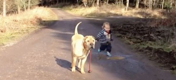 Dog Waiting While Toddler Splashes Around In Puddle Is A Sign Of True Friendship