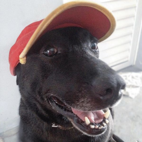 Negão sporting his gas station hat.