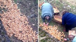Someone Dumped 1,000 Tiny Chicks In A Field And Left Them To