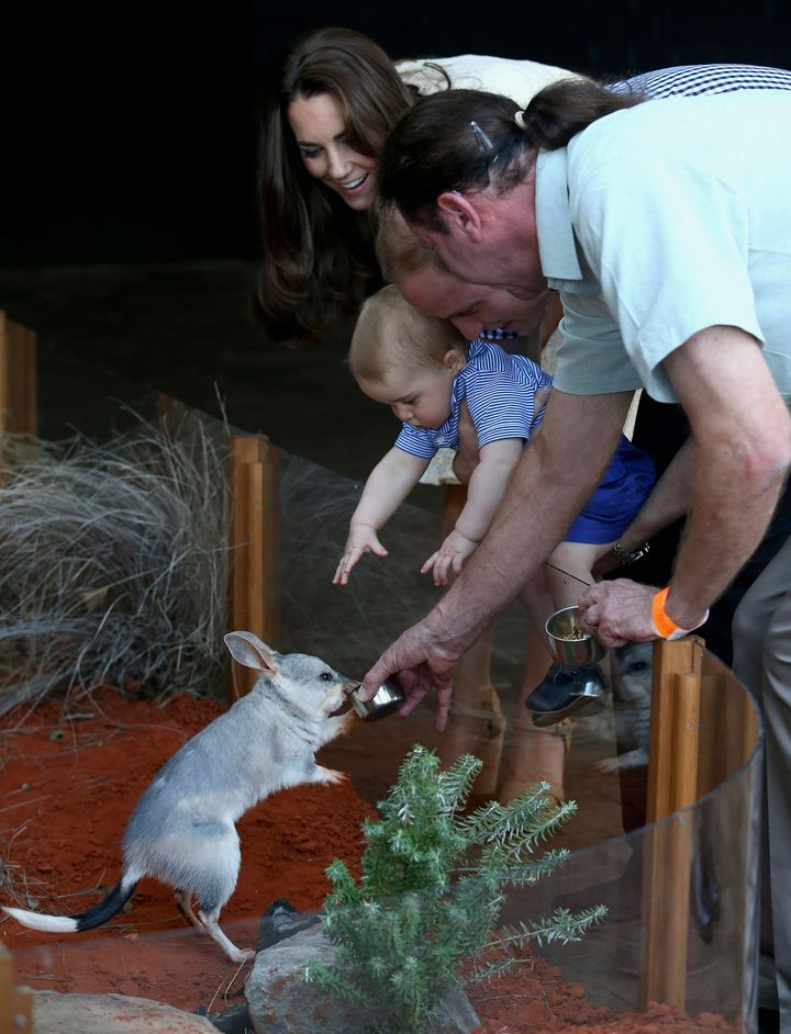 Prince George checks out a bilby named after him at Taronga Zoo in Sydney in 2014 with parents Prince William and Catherine,