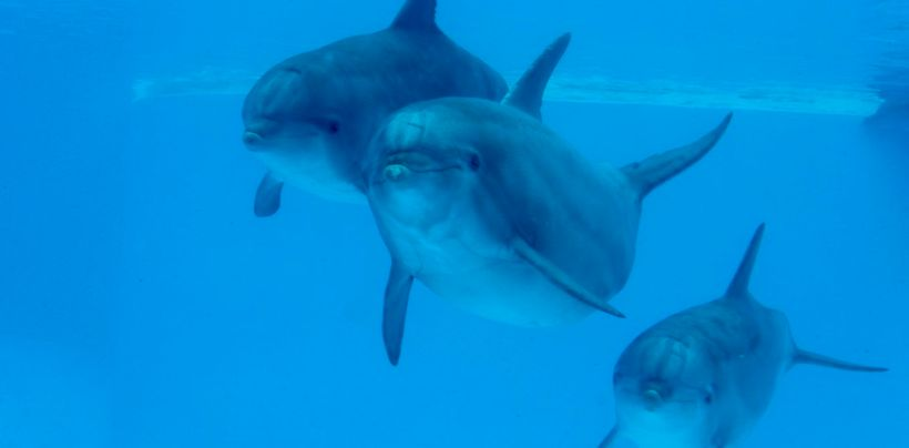 Swimming in synchrony is a fundamental social behaviour for dolphins and is thought to reinforce their bonds.