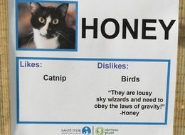 Rescue Cats Given Hilarious Personalities To Help Them Find New Homes