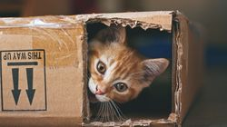 Having A Cat Does Not Cause Mental Illness, New Study
