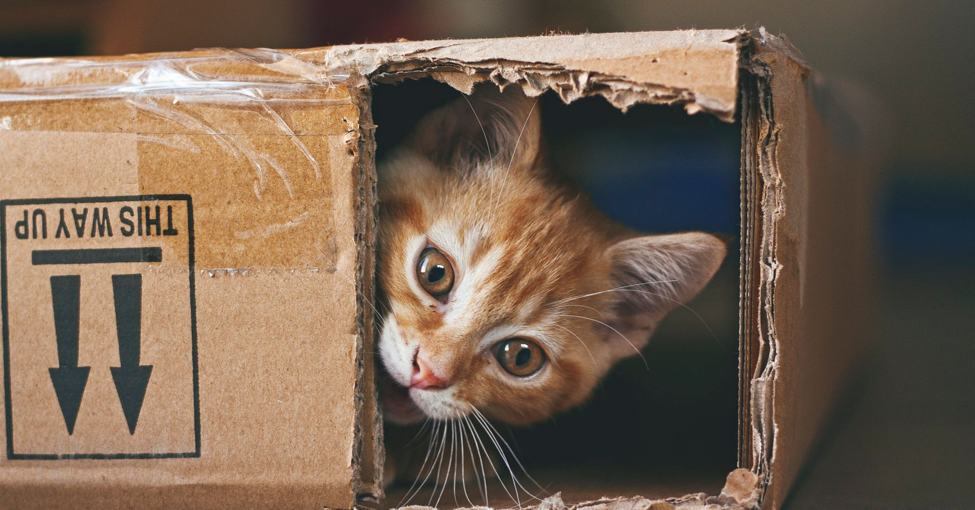 Adopt A Cat London Free