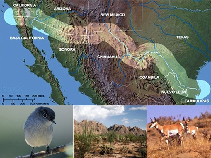 US-Mexico Border:  Threatened California Gnatcatcher, Sonoran desert habitat, and Endangered Pronghorn.    <em>A little known
