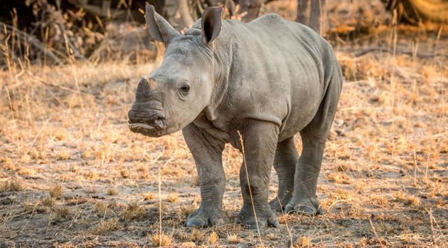 Poachers killed two rhinos at an animal orphanage in South Africa and help staff hostage for