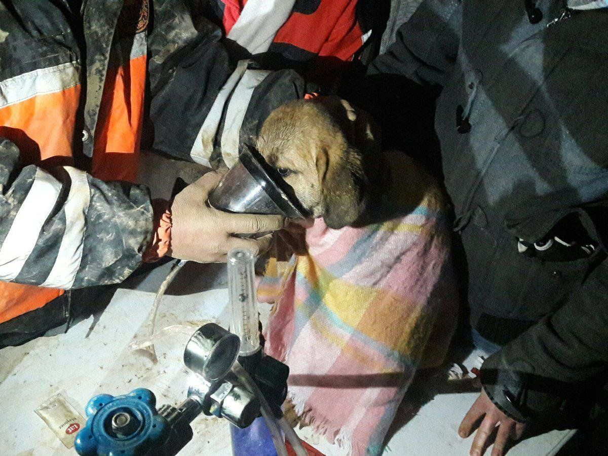 Kuyu shortly after his rescue.