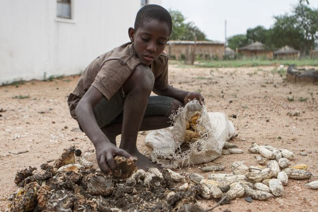 A 13-year-old boy gathers food in the village of Nsezi in Matabeleland, southwestern