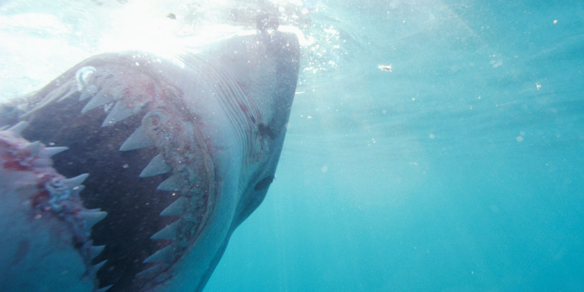 U.S. Surf Champ Kelly Slater Calls For Shark Cull After Boogie-Boarder Death