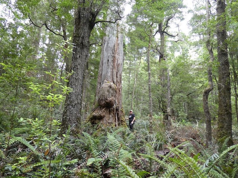 Frankland River ancient forests are stocked with a rich array of biodiversity.