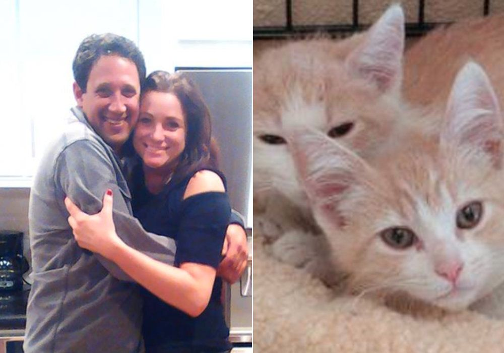 Cat Brothers Separated At Rescue Shelter Reunited After Owners Match On