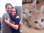 Cat Brothers Separated At Rescue Shelter Reunited After Owners Match On Tinder