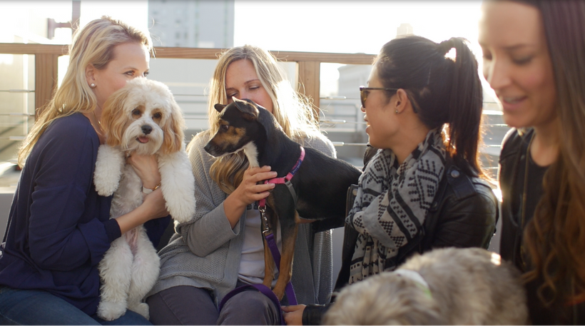 "Puppy Mama ""Yappy Hour"" in downtown San Francisco"