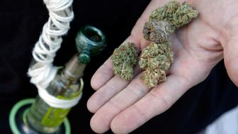An attendee holds out several marijuana buds at the High Times U.S. Cannabis Cup in Seattle, Washington September 8, 2013. Washington state was one of the first states to legalize marijuana for recreational use after approving separate ballot initiatives last year, even as the drug remains illegal under federal law. The Cup features exhibitions as well as a marijuana growing competition. REUTERS/Jason Redmond (UNITED STATES - Tags: DRUGS SOCIETY)