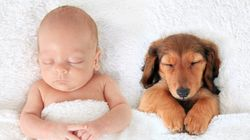 These Baby Pics Confirm Animals Are The Absolute Cutest Nap