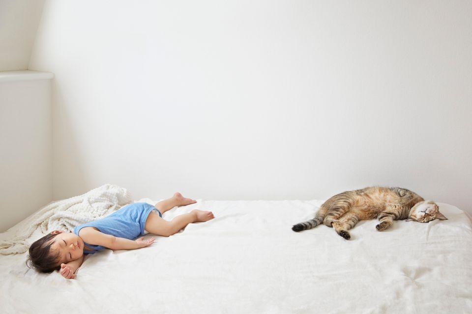 Estas fotos confirman que los animales son los mejores compañeros de