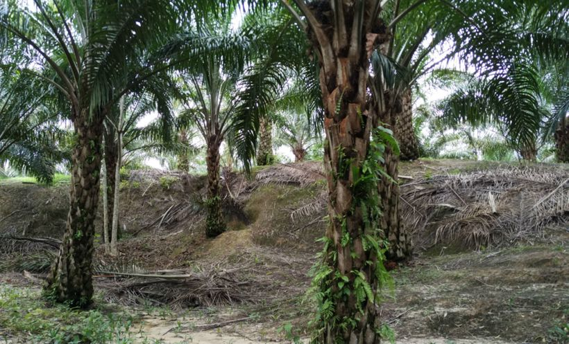 malaysian palm oil industry new market Economics and industry development division, malaysian palm oil board.