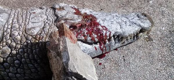 Crocodile Stoned To Death By Visitors At Tunis Zoo