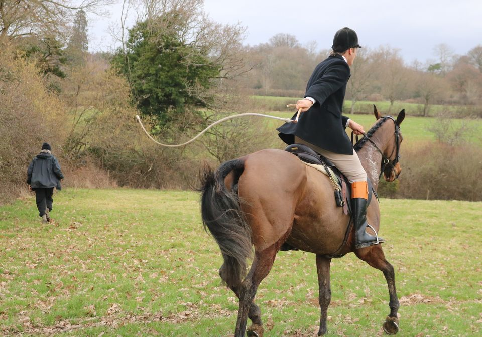 The 'whipper-in' assists the huntsman with the discipline and behaviour of hounds in the
