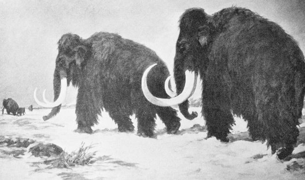 Woolly mammoths had genetic 'meltdown'