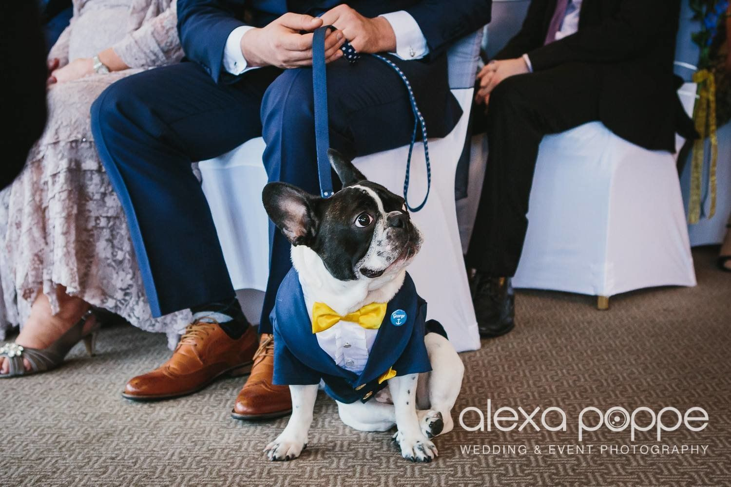 George The French Bulldog Takes His Ring Bearer Duties Very Seriously