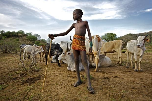 <em>In Turkana, a young boy looks after his tribe&#39;s cows.</em>