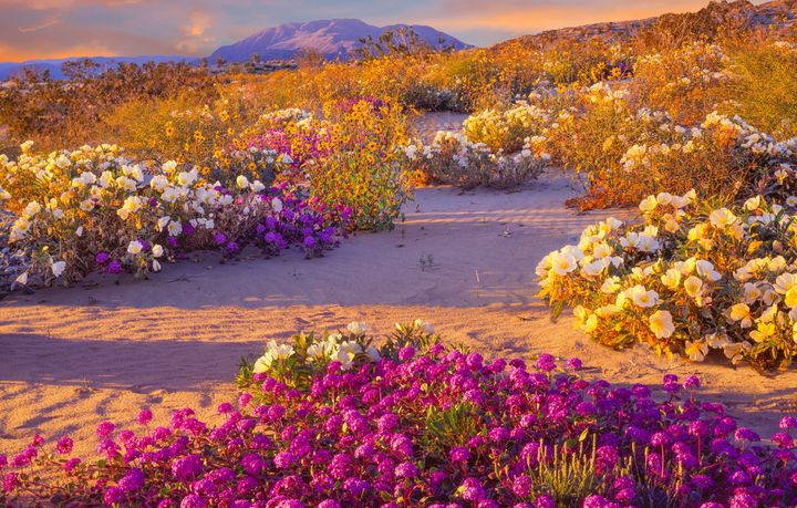 Off Topic Super Bloom In California Is Just Days Away Intel