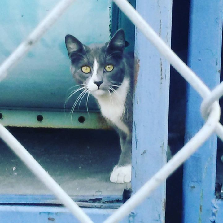 <p>Community (feral) cat in Los Angeles</p>