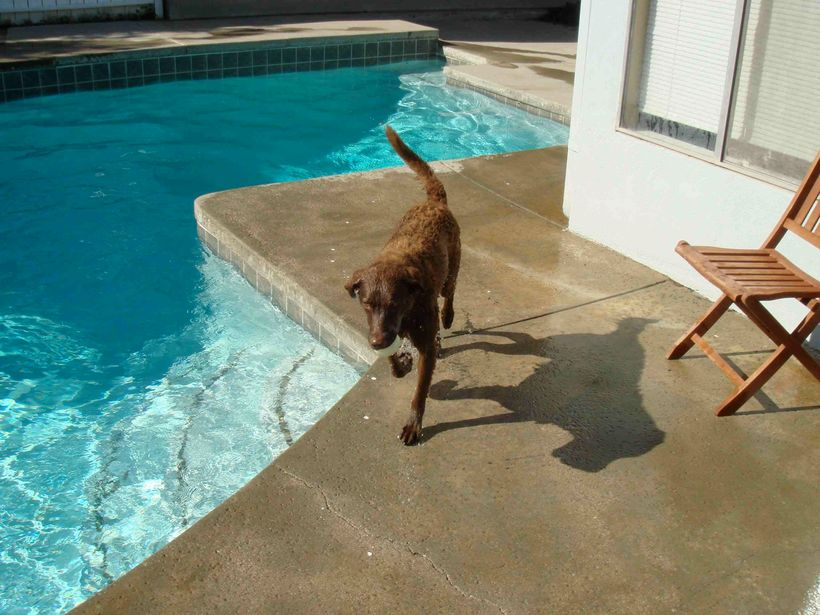 At home, Naio playing ball in the pool.