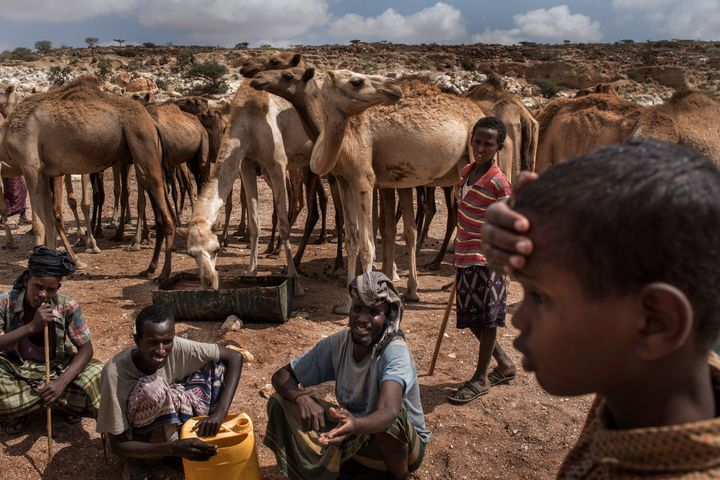 Pastoralist men and boys let their camels drink water from a nearly dried-up riverbed on Feb. 24, 2017, in Dhudo, Somalia.