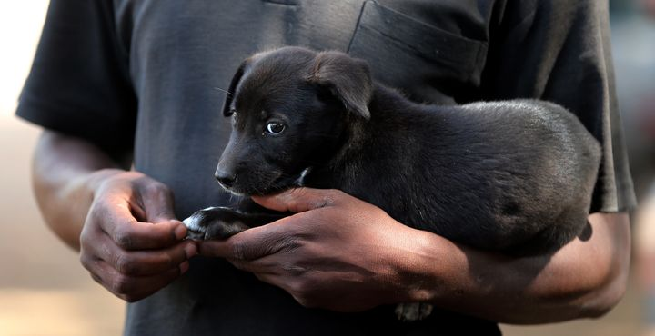 An owner holds a puppy as people wait to have their dogs administered rabies vaccines in Bunda, Tanzania, Oct. 8, 2012.