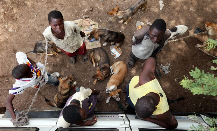 Boys wait in line with their dogs during a mass rabies vaccination day in Bunda, Tanzania, Oct. 8, 2012.