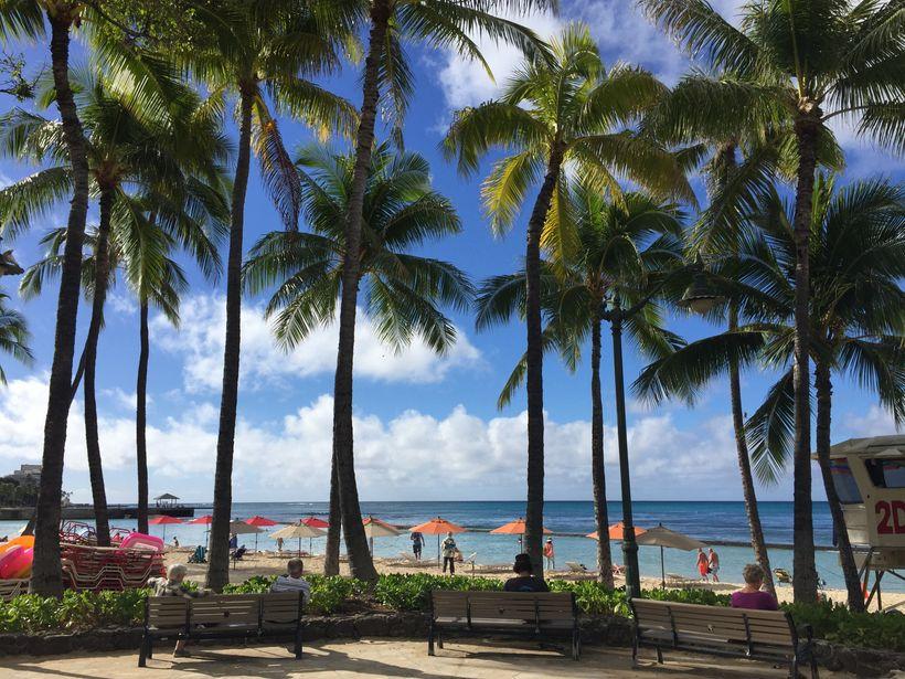 Waikiki Beach was the royal coconut grove when Mark Twain arrived.