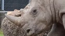 Poachers Break Into French Zoo And Slaughter Rhino For His