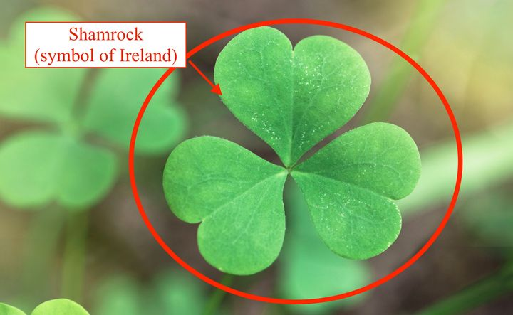 """The shamrock is<a href=""""http://www.smithsonianmag.com/arts-culture/no-one-really-knows-what-shamrock-180954578/"""" target"""