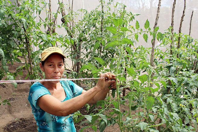 Mercedes Sanchez de Garcia in the greenhouse in Las Piedritas, El Salvador. Photo: UN Women/Monika Remé
