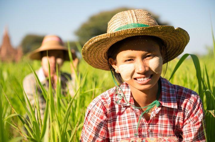Women working the the fields in Myanmar