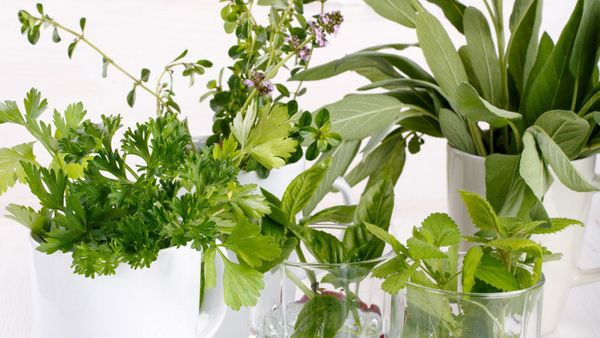 Those plastic containers of basil, mint, rosemary and thyme you picked up in the produce aisle might seem like the perfect st