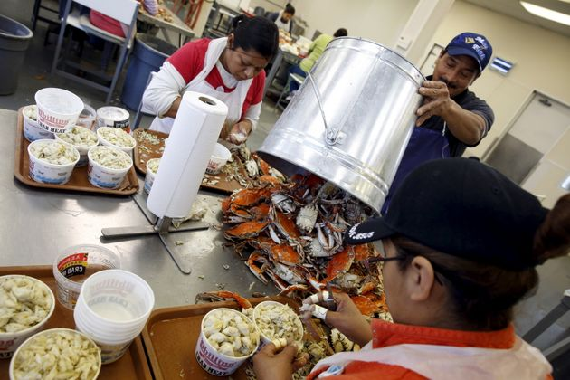 Mexican workers, who came as seasonal laborers under the H-2B program, process crabs on Hoopers...