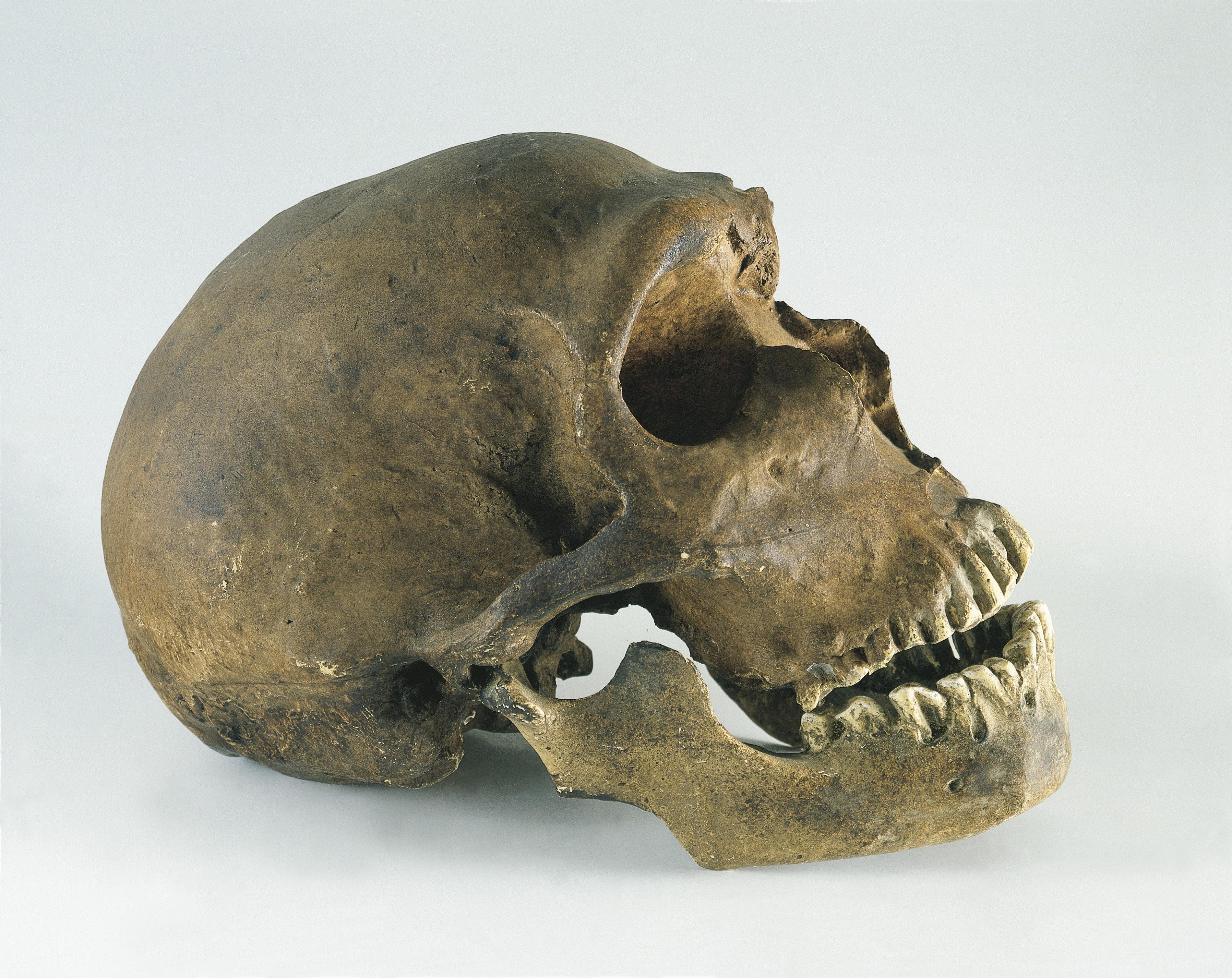 Neanderthals Actually Used 'Aspirin' Just Like