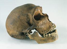 Neanderthals Actually Used 'Aspirin' Just Like Us