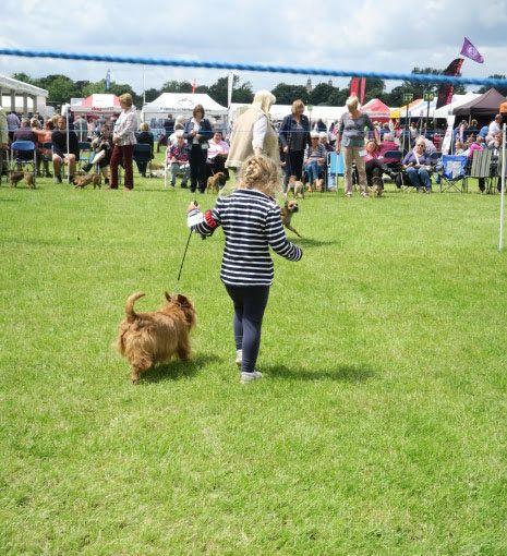 Jessica Allen, four, with Australian Terrier Annie at