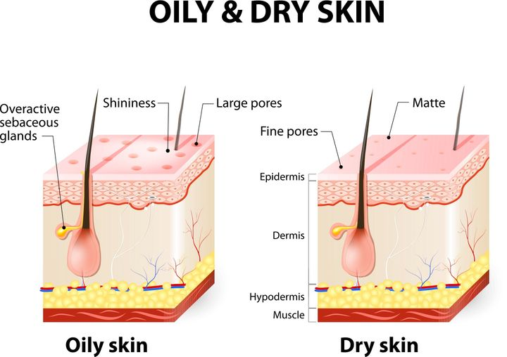The difference between oily and dry skin