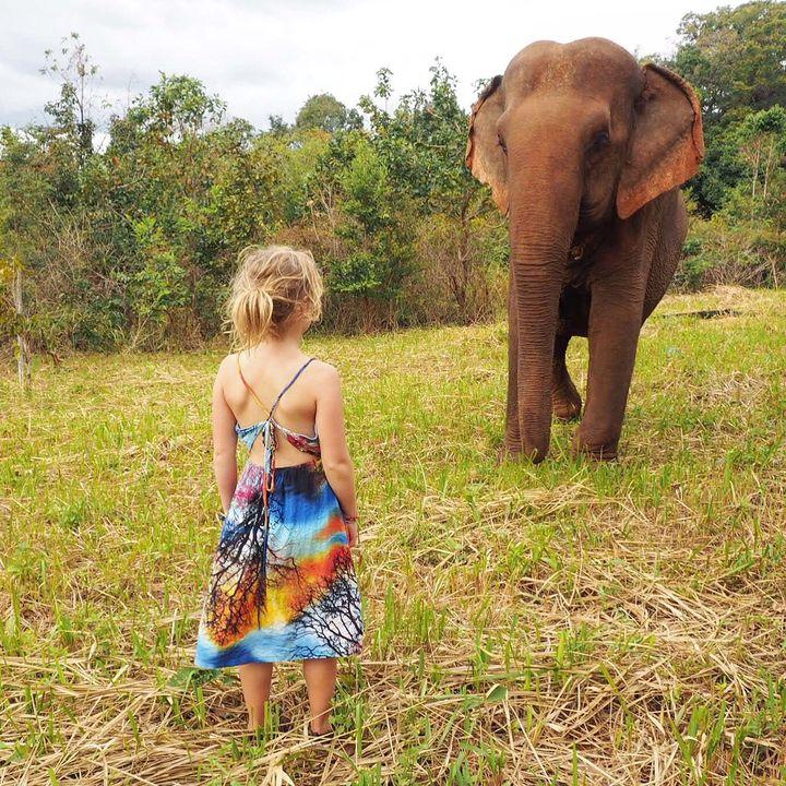 <p>Meeting Sambo at the Elephant Valley Project, Cambodia</p>