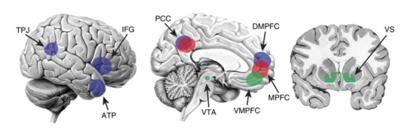 The three brain networks that may be involved in social media use
