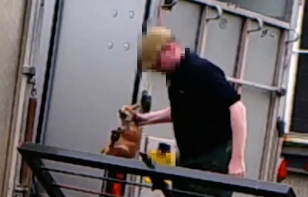 An investigation was launched after footage appeared to show live fox cubs being thrown into hunting...