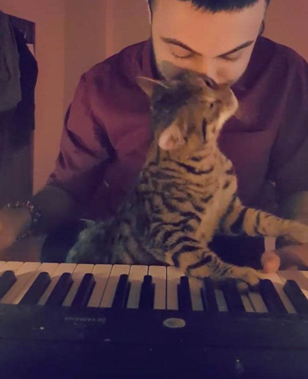 Musician Brings All The Cats To The Yard With Beautiful Piano