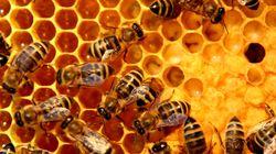 FYI, Honey Is Basically Bee