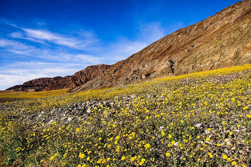 Best Places in California to See Wildflowers with Kids This