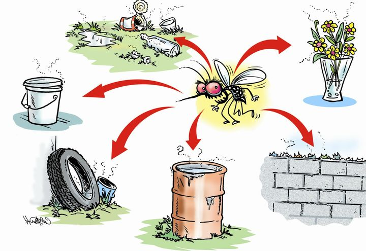 Vector control is the primary method of dengue prevention.